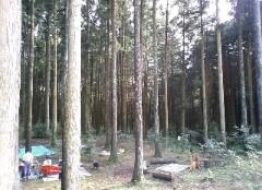 今日はこんな森の中で