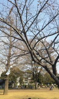 桜は咲いてないけど